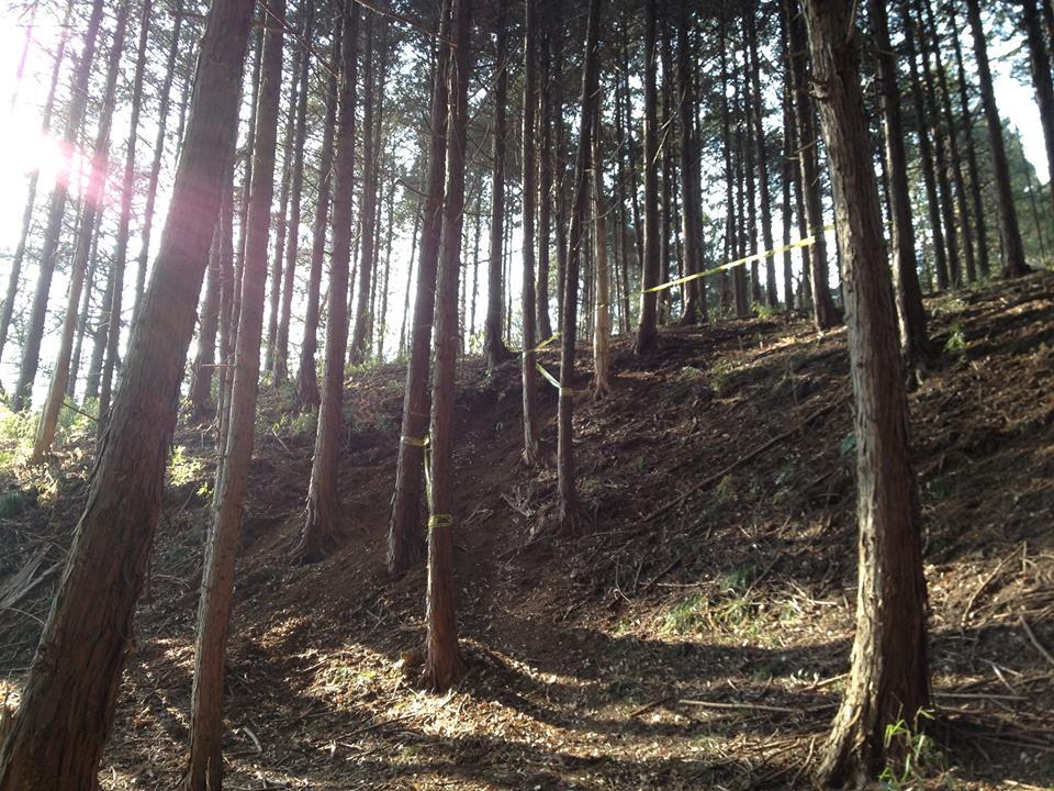 林間エリア